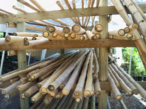 Bamboo poles sacramento california jungle supply